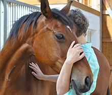 osteopathie-pferd01